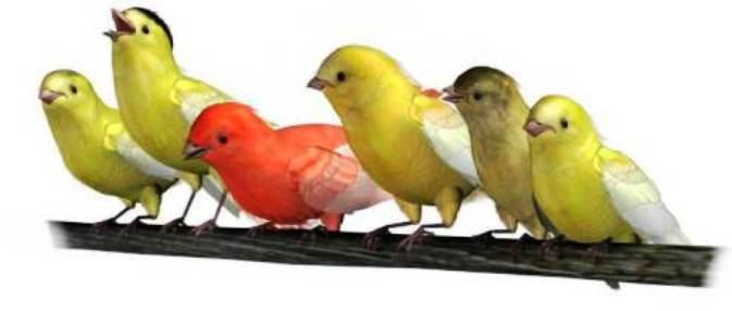 sukses menangkar burung