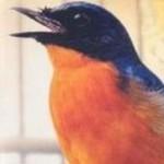 Burung tledekan atau sulingan gacor hanya bisa kita dapatkan jika kita memperhatikan kesehatan dan perawatan harian termasuk asupan makanan yang bergizi, penuh vitamin dan mineral.