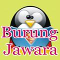 TOP BURUNG JAWARA