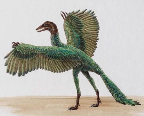 Archaeopteryx, benarkah burung pertama?