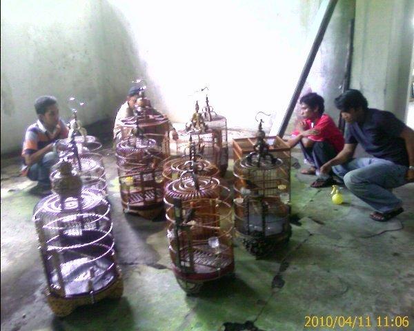 Papburi Solo Siap Bantu Kembangkan Lomba Burung Gaya Lesehan Di Kota Lain Om Kicau