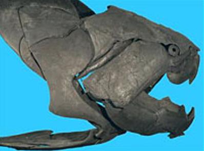 Dunkleosteus, ikan jaman pra sejarah