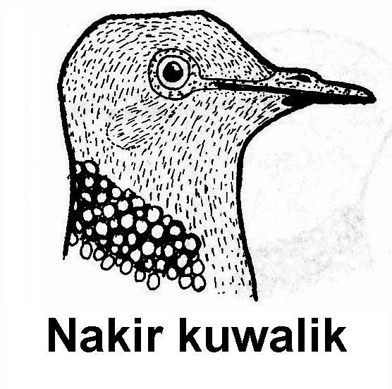 Gambar Elegant Gambar Sketsa Burung Merpati Ide Desain ...