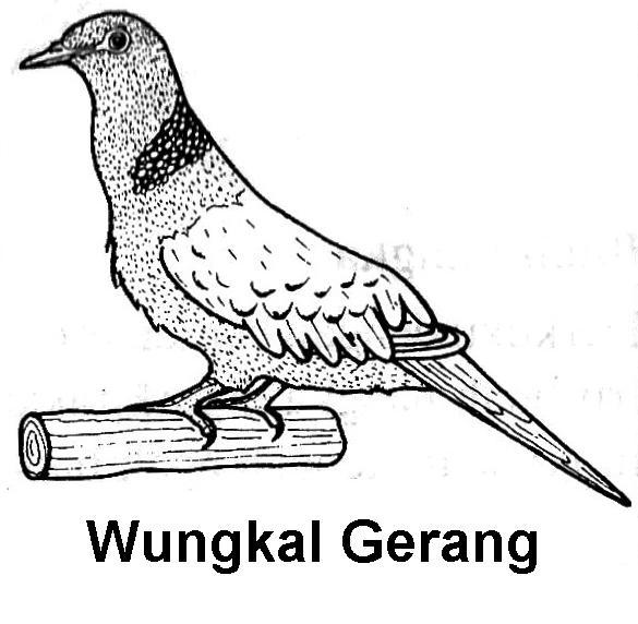 Gambar Burung Merpati Untuk Mewarnai