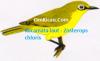 Gambar Burung Kacamata Laut Zosterops chloris