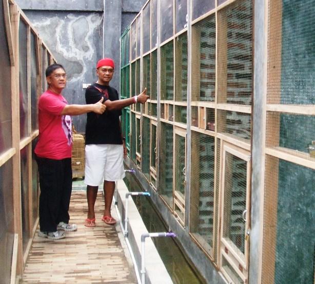 H Syamsul Saputro dan H Elviano di kandang penangkaran SKL Bird Farm Jatibarang