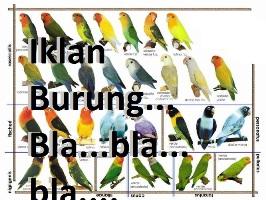 Hati-hati selalu dengan iklan burung apapun - baik offline maupun online