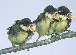 hindari penangkaran burung inbreeding
