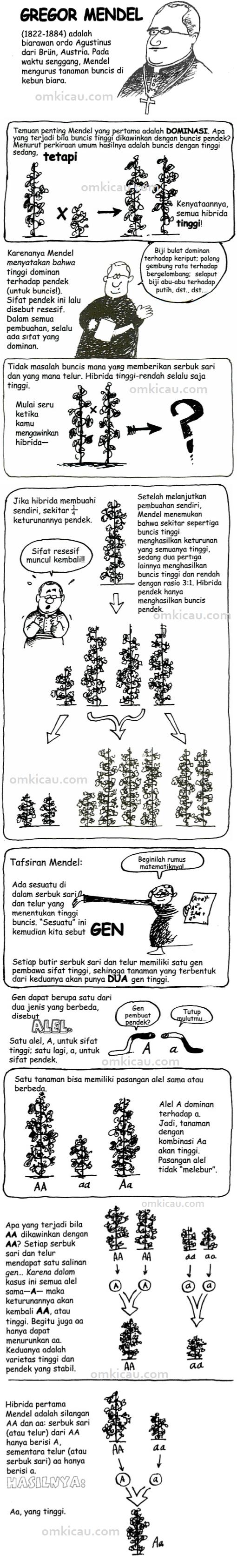 Teori Genetika Mendel-omkicau