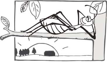Semut rangrang penghasil kroto suka udara segar
