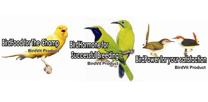 burung sakit dan obatnya