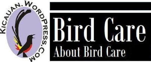 persoalan burung