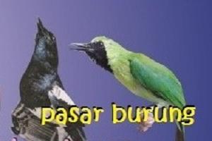 hati-hati jual beli burung online
