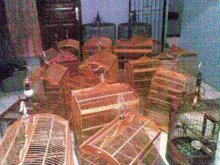 Sisa-sisa my bird-farm Om Deni Rosdiana