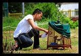 bird-competition-in-phuket