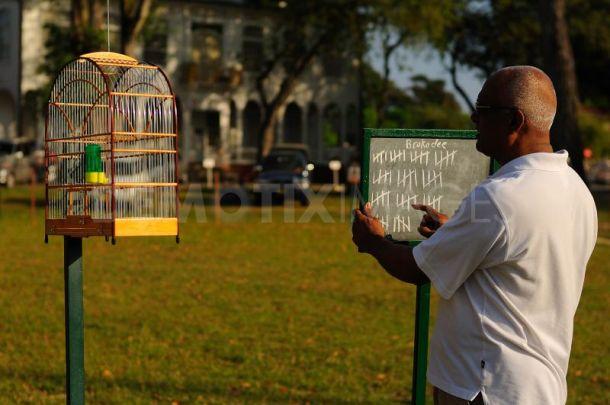 lomba burung di luar negeri