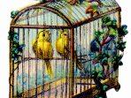 Wallpaper, gambar, foto, lukisan burung kenari (picture, painting and photo canary) (23)