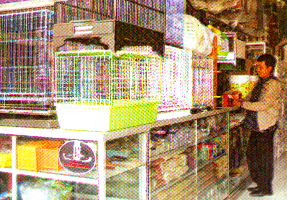 Kalimantan Jaya - pionir kios burung di Samarinda