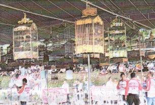Lomba Bali makin ramai