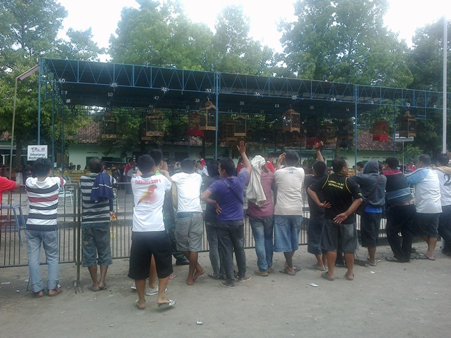 Lomba burung Mr Dong Cup 2