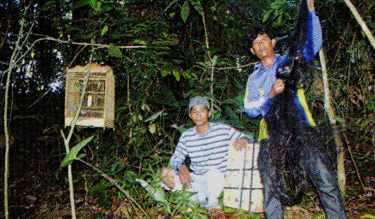 Pemikat burung di Kalimantan