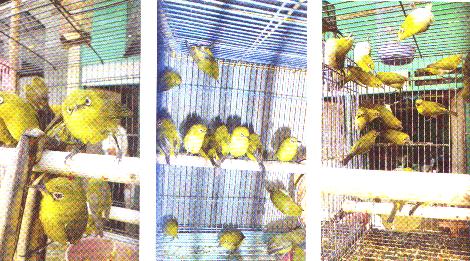 Pleci di Pasar Mojokerto
