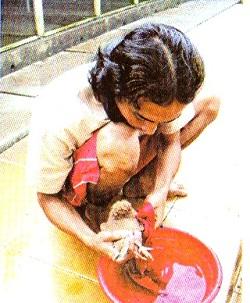 Bersih-bersih piyik merpati - salah satu usaha mencegah berak kapur