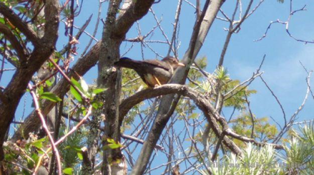 Burung Sejati Ciremai - salah satu jenis burung yang dilindungi yang ada di wilayah Kuningan