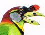burung takur-