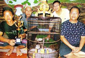 Burung Kacer Diplomat