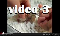 Video ketiga
