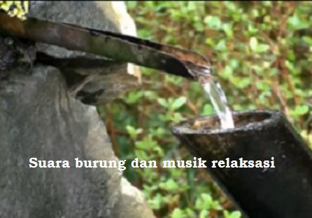 Suara burung dan musik relaksasi