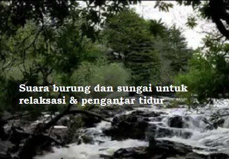 Suara burung dan sungai untuk relaksasi pengantar tidur