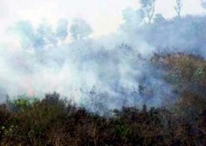 Hutan di lereng Gunung Argopuro Jatim terbakar