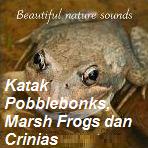 Kawanan katak