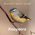 Suasana kawasan hutan Kooyoora Australia