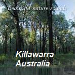Suasana hutan Killawarra Australia