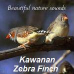 Suara Zebra Finch