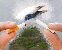 kampanye penggalangan dana penyelamatan burung - yayasan kutilang