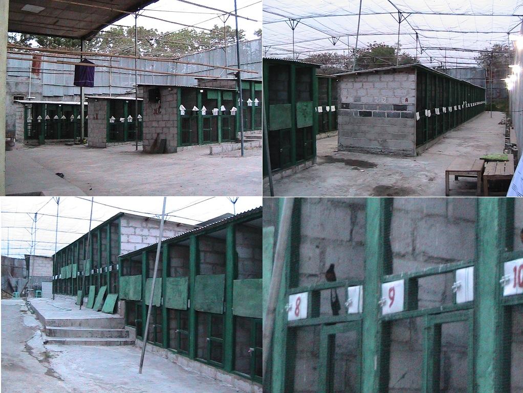 Kandang penangkaran murai batu Global Fauna Farm