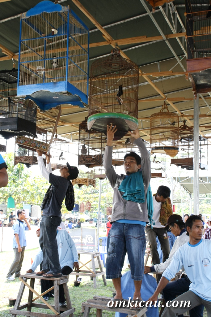 Lomba Burung di Sampit