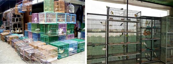 Penangkaran dan Pasar Burung