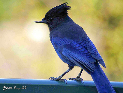 Burung Patah Paruh