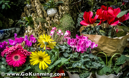 Aneka bunga dengan aneka warna ditata rapi untuk menarik minat pembeli di Pasar Burung dan Bunga Yuanbo
