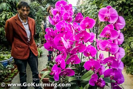 Anggrek dengan bunga indah dipajang di Pasar Yuanbo