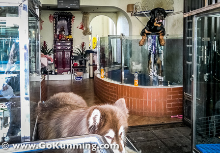 Anjing dan binatang lain dipajang di etalase toko di Pasar Yuanbo