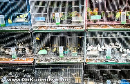 Kandang-kandang burung berjejer di los burung Pasar Yuanbo