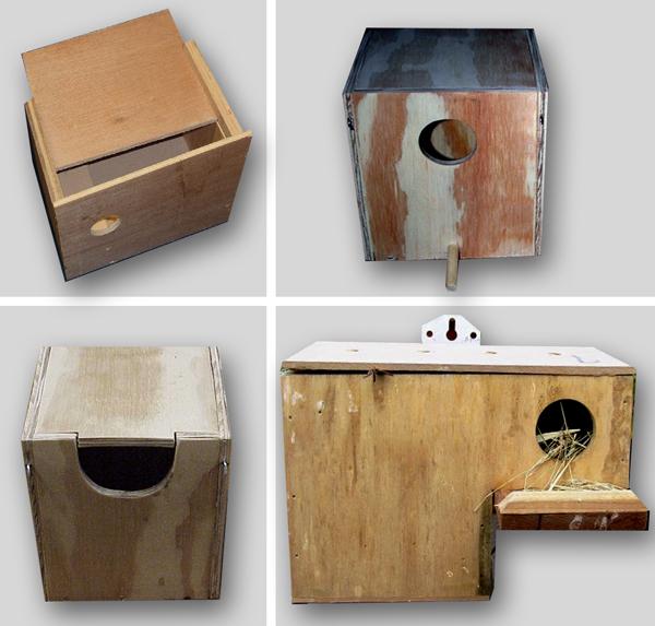 Kotak Sarang Gould Amadin