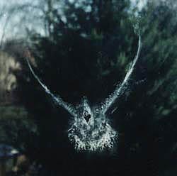 bekas tabrakan burung di jendela