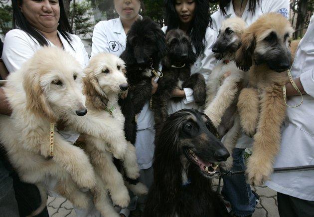 Snuppy - anjing kloning pertama dan anak-anaknya
